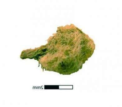 В Андах найден самый древний кабачок