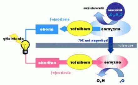 Японцы придумали биобатарейки из глюкозы