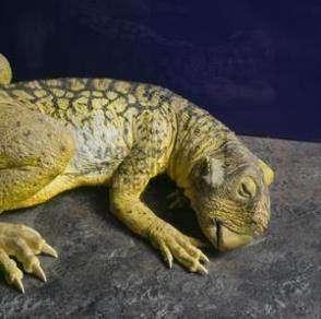 Детеныши Psittacosaurus ходили стаей