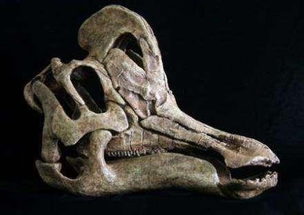 Динозавр-волынка найден на территории Мексики