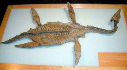 Один из самых древних плезиозавров Северной Америки