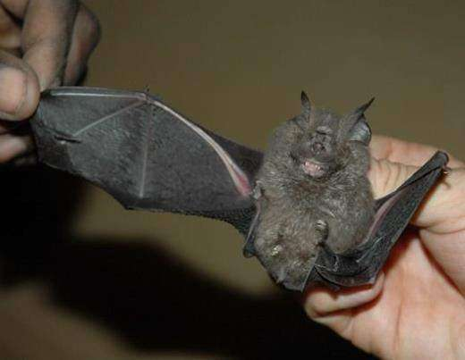 В Конго найдены новые виды животных