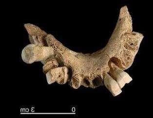 Останки самого древнего в Европе человека