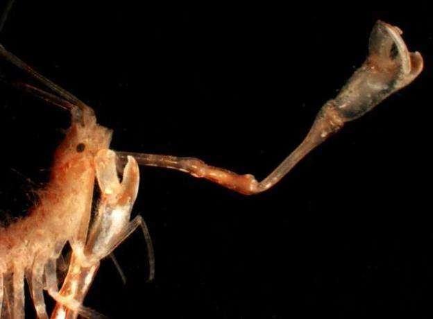 В Антарктике найден затерянный морской мир